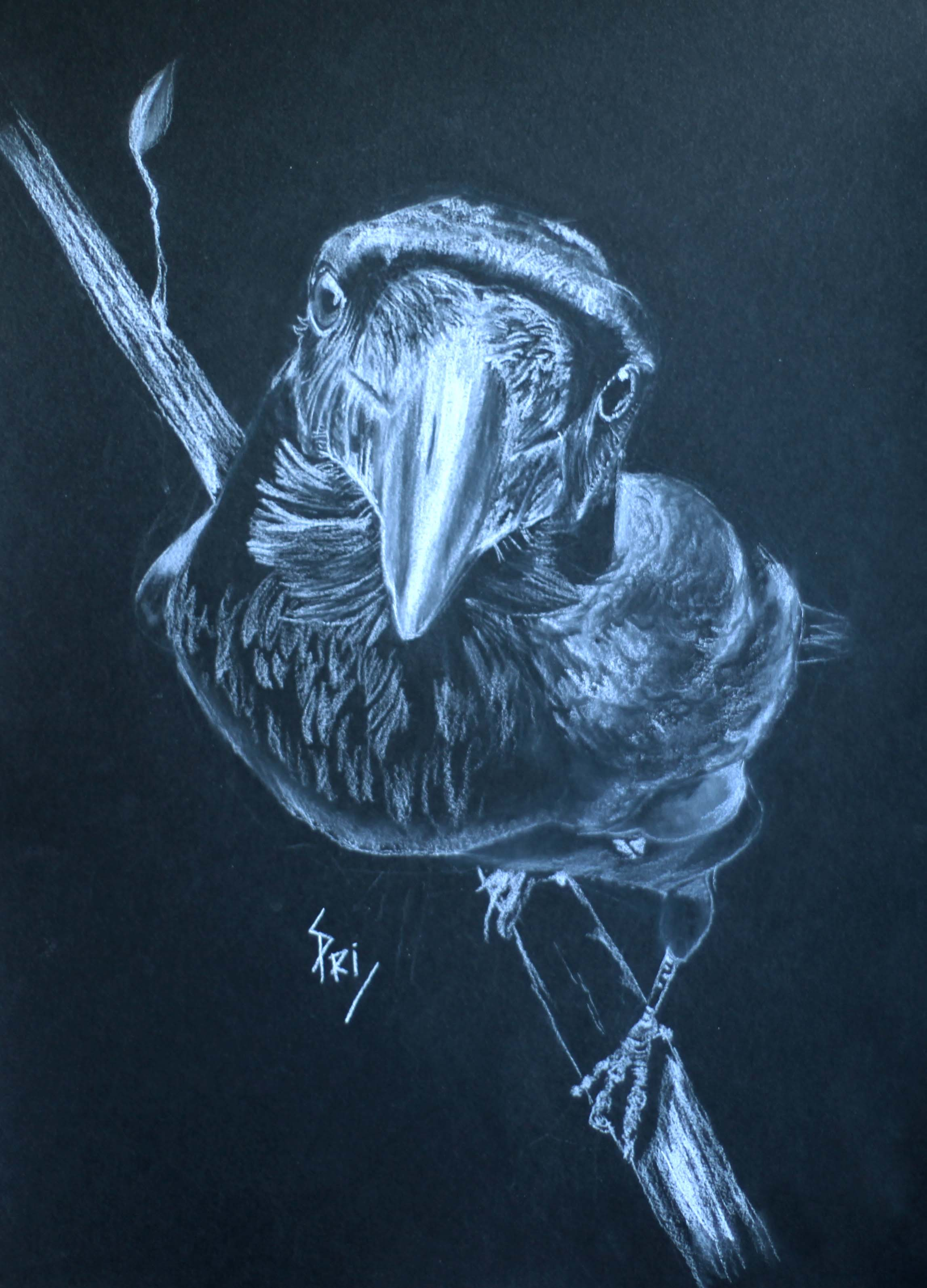 Dessin au crayon blanc sur papier noir par Priscilla Seiller
