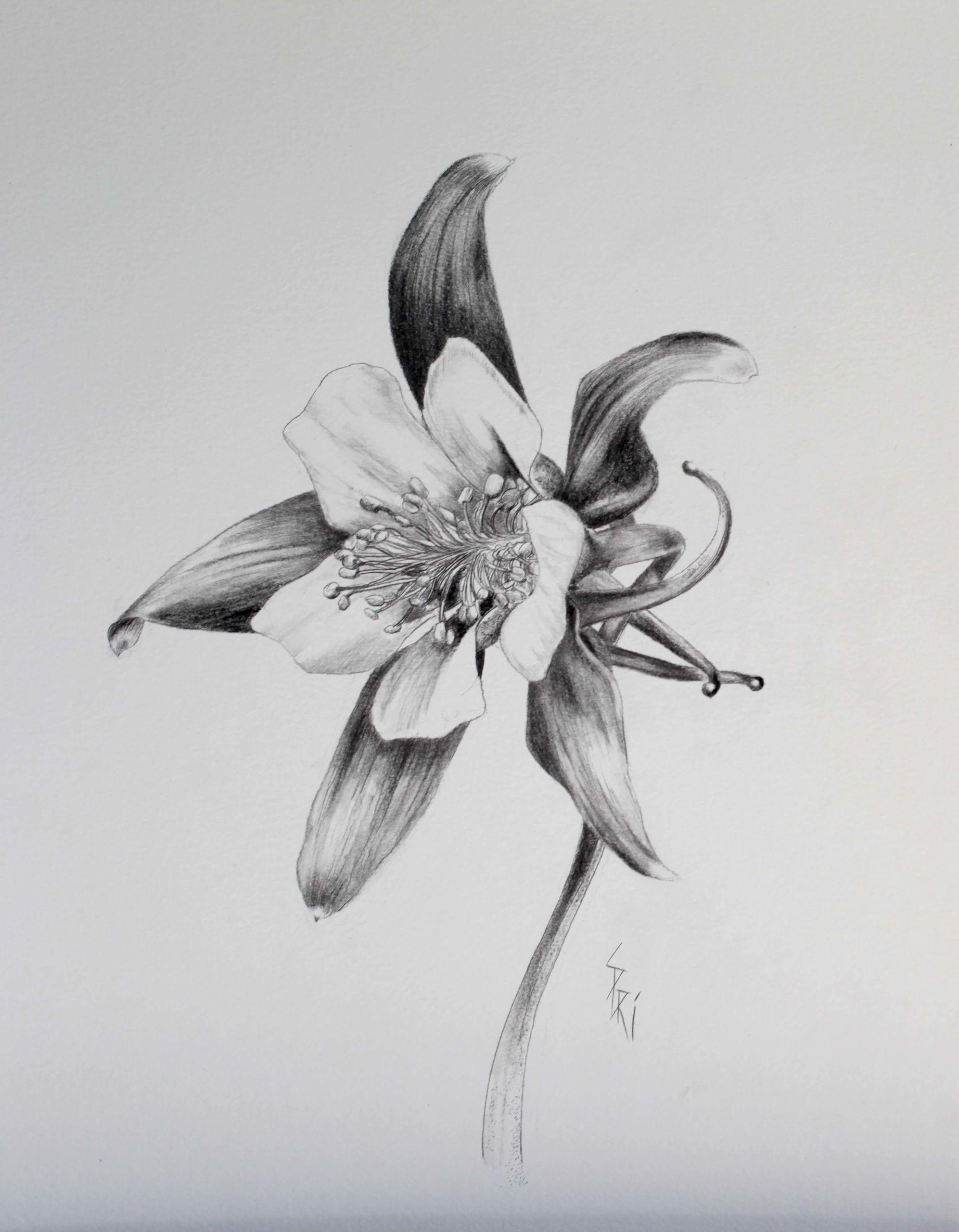dessin de fleurs par Priscilla Seiller