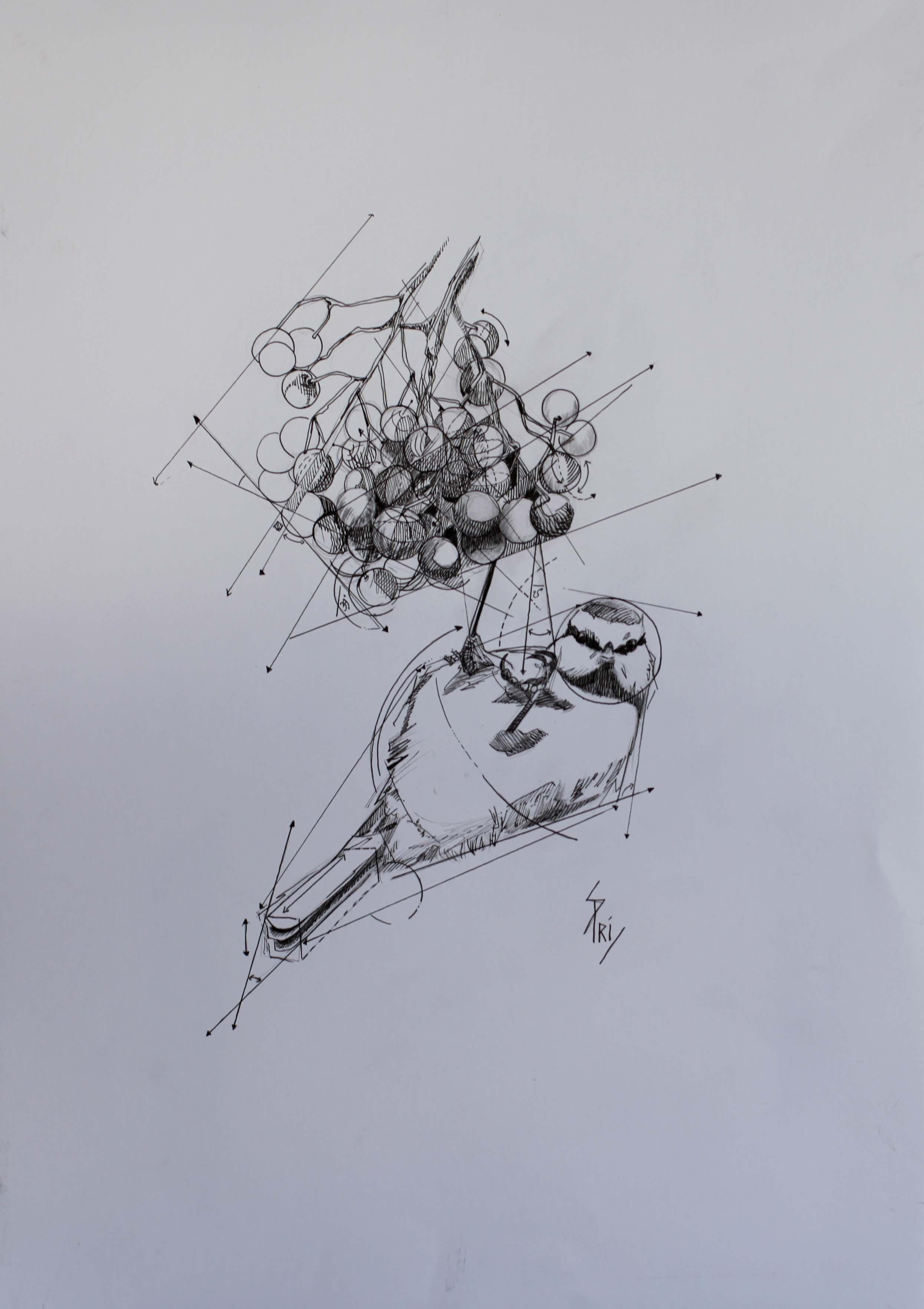 Mésange au stylo par la dessinatrice Priscilla Seiller